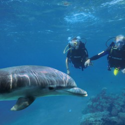 Swimming with the dolphins in Eilat