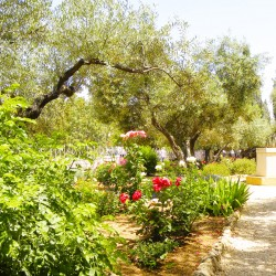 The Garden of Gethsemane is located in Jerusalem