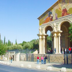 The Garden of Gethsemane is next to the Church of All Nations in Jerusalem