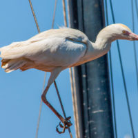 Bird in Jaffa Israel