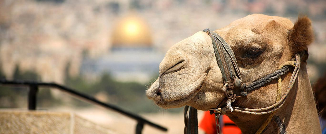 A beautiful view of Jerusalem