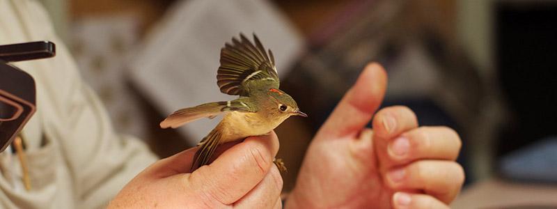 The Jerusalem Bird Observatory