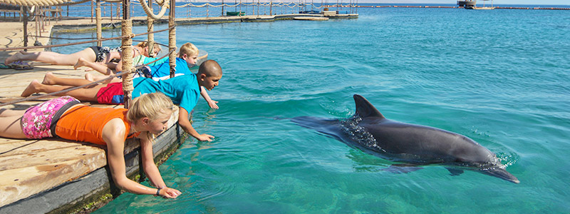 Dolphin reef in Eilat