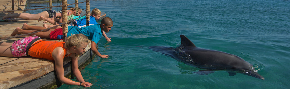 Playing with the dolphins in Eilat.
